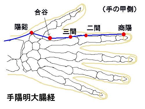 大腸経.jpg